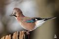 Natürliche Ordnung III: Vögel