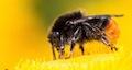 Natürliche Ordnung II: Insekten