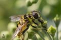 Natürliche Ordnung V: Insekten und Spinnen