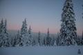 Natürliche Ordnung VI: Winter