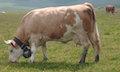 Schlechtes in guter Absicht tun: die Regulierung des Milchpreises